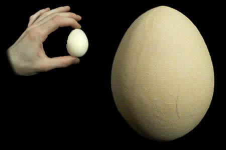 Fake egg (Wood)